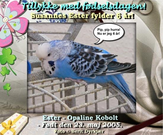 news: ester_6_aar_2011_bd.jpg