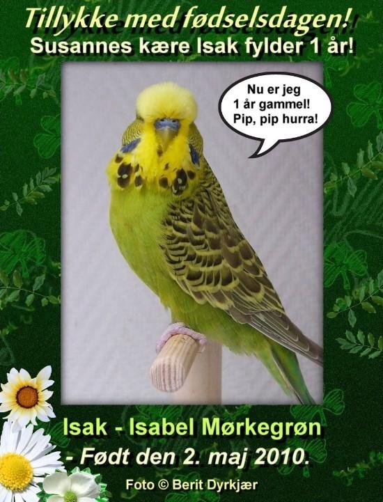 news: isak_1_aar_2011.jpg
