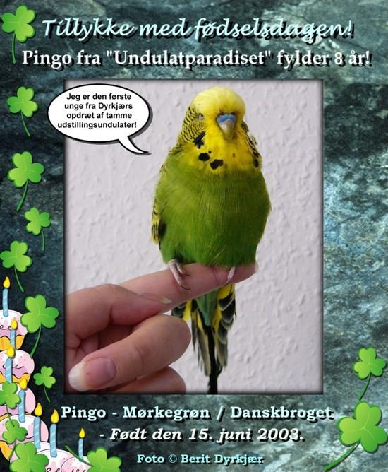 news: pingo_8_aar_2011-.jpg