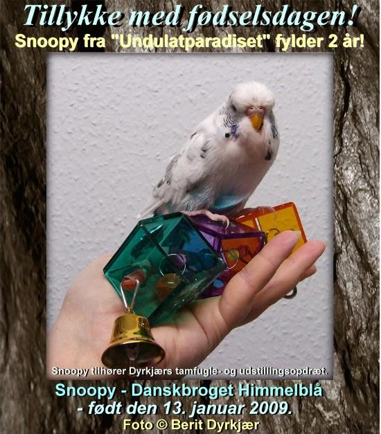 news: snoopy_2_aar_2011.JPG