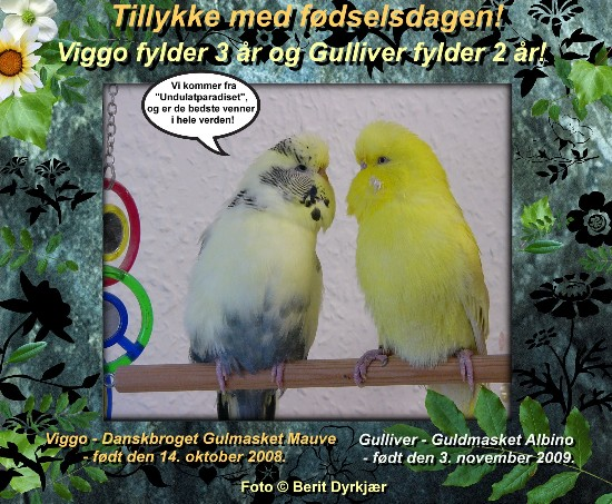 news: viggo_3_aar_gulli_2_aar_2011.jpg